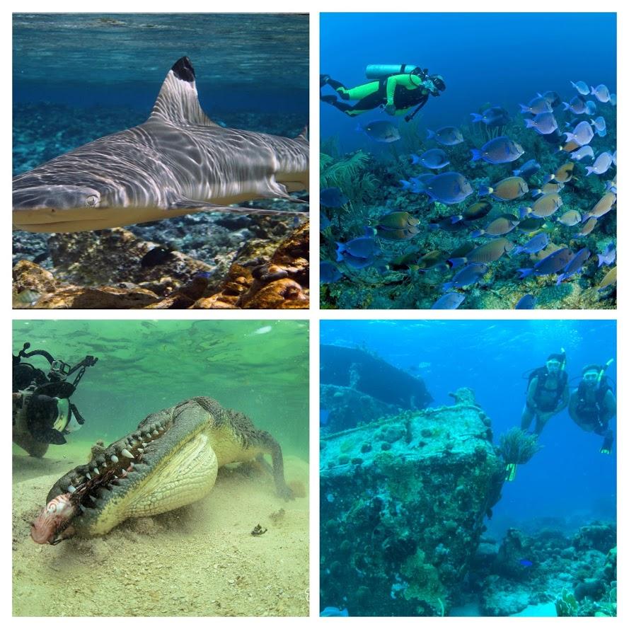 La vida marina en Banco Chinchorro son las tortugas